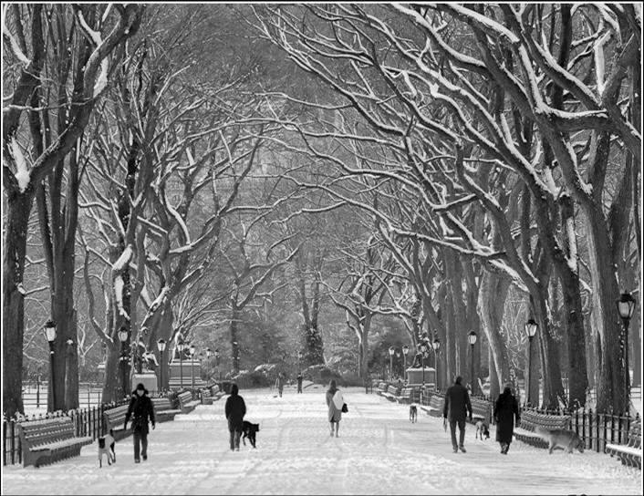 winter walk central park with people - Christmas In Black And White